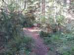 Forêt Chaillol