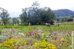 Jardins des Hautes Terres Chaillol